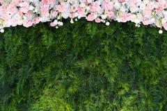 Disposizione di fiori verde del contesto Fotografia Stock Libera da Diritti
