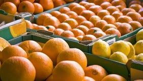 Disposizione di frutta Fotografia Stock Libera da Diritti