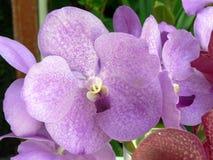 Disposizione di Orchidea Fotografia Stock