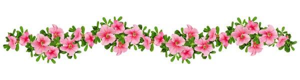 Disposizione di Wave dei fiori della petunia Immagine Stock