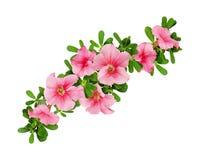 Disposizione di Wave dei fiori e delle foglie della petunia Fotografia Stock Libera da Diritti