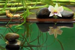 Disposizione di wellness dell'orchidea Fotografie Stock Libere da Diritti