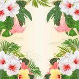 Disposizione floreale dei fiori tropicali della pagina, con l'ibisco rosa e la palma gialli e bianchi di Brugmansia, vect d'annat royalty illustrazione gratis
