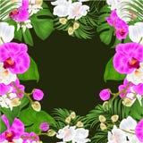 Disposizione floreale dei fiori tropicali della pagina, con la bella annata porpora e bianca della palma e del philodendron di ph illustrazione di stock
