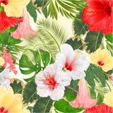 Disposizione floreale dei fiori tropicali senza cuciture di struttura, con l'ibisco bianco e la palma rossi e gialli di Brugmansi royalty illustrazione gratis