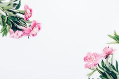 Disposizione floreale di disposizione del piano con i fiori rosa immagini stock