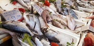 Disposizione fresca dei frutti di mare visualizzata nel mercato ittico immagini stock
