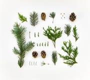 Disposizione naturale creativa delle piante di inverno su fondo bianco Disposizione piana, vista superiore Immagini Stock Libere da Diritti