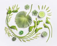 Disposizione piana botanica con le foglie tropicali, la crassulacee, i fiori verdi e le candele su fondo bianco, vista superiore fotografia stock libera da diritti