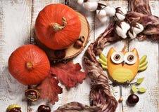 Disposizione piana di autunno con le zucche e la decorazione del gufo fotografie stock