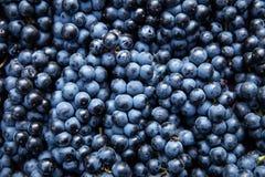 Disposizione piana, i lotti dell'uva blu organica, vino di concetto ed il raccolto Immagine Stock Libera da Diritti