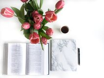 Disposizione piana: Tulipano rosso, petali rossi e una bibbia su una tavola bianca fotografie stock