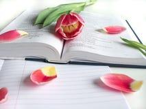 Disposizione piana: Tulipano rosso, petali rossi e una bibbia su una tavola bianca immagini stock libere da diritti