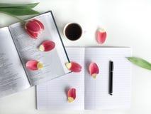 Disposizione piana: Tulipano rosso, petali rossi e una bibbia su una tavola bianca immagini stock