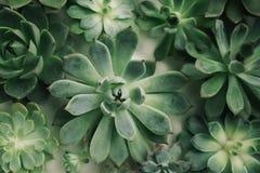 Disposizione rettangolare dei succulenti; succulenti del cactus in una piantatrice disposizione dei succulenti o dei succulenti d Fotografia Stock