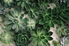 Disposizione rettangolare dei succulenti; succulenti del cactus in una piantatrice disposizione dei succulenti o dei succulenti d Fotografie Stock