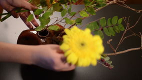 Disposizione semplice di ikebana stock footage