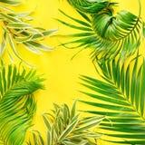 Disposizione tropicale del piano di giallo delle foglie di palma di variazioni Immagine Stock