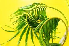 Disposizione tropicale del piano di giallo delle foglie di palma di variazioni Immagine Stock Libera da Diritti
