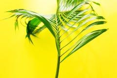 Disposizione tropicale del piano di giallo delle foglie di palma di variazioni Immagini Stock Libere da Diritti