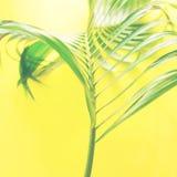 Disposizione tropicale del piano di giallo delle foglie di palma di variazioni Fotografie Stock Libere da Diritti