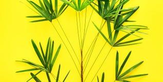 Disposizione tropicale del piano di giallo delle foglie di palma di variazioni Fotografia Stock Libera da Diritti