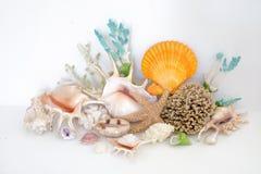 Disposizione variopinta delle conchiglie e del corallo Immagine Stock Libera da Diritti