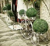 Disposizione verde ad un negozio di fiore, Napoli, Italia Immagini Stock