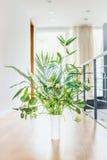 Disposizione verde della pianta d'appartamento in vaso al fondo leggero della finestra e del pavimento Vivente urbano e disegnare Immagini Stock Libere da Diritti