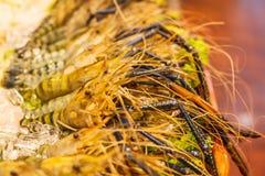 Disposizione vigorosa congelata fresca del gamberetto del gamberetto del fiume della tigre davanti al ristorante Concetto dei fru Fotografia Stock