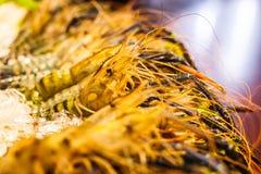 Disposizione vigorosa congelata fresca del gamberetto del gamberetto del fiume della tigre davanti al ristorante Concetto dei fru Fotografie Stock Libere da Diritti