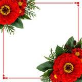Disposizioni d'angolo dei fiori di zinnia e una struttura Immagine Stock