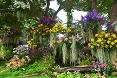 Disposizioni dei fiori Fotografia Stock Libera da Diritti