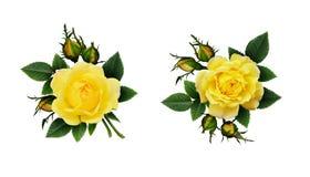 Disposizioni di fiori della rosa di giallo Fotografie Stock Libere da Diritti