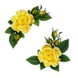 Disposizioni di fiori della rosa di giallo Immagine Stock