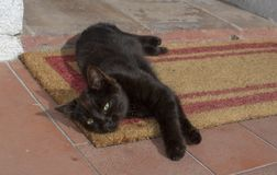 Disposizioni marroni scure ed allungamenti del gattino sulla stuoia della fibra e sul floo di terracotta immagine stock libera da diritti