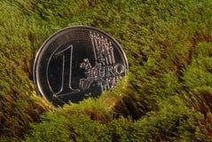 Disposizioni perse della moneta su un muschio immagini stock libere da diritti
