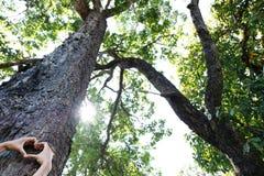 Disposto sul tronco di grande albero con le dita ha esteso, simbolizzando il collegamento fra gli esseri umani e la natura Fotografia Stock Libera da Diritti