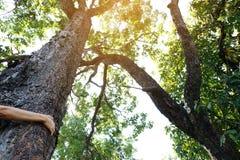 Disposto sul tronco di grande albero con le dita ha esteso, simbolizzando il collegamento fra gli esseri umani e la natura Fotografie Stock