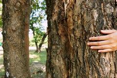 Disposto sul tronco di grande albero con le dita ha esteso, simbolizzando il collegamento fra gli esseri umani e la natura Fotografia Stock