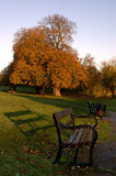 Diss Town Park and Bench. A early Autumn morning in Diss Town Park, Norfolk East Anglia England United Kingdom. The low rising sun causing the bench to cast a Royalty Free Stock Image