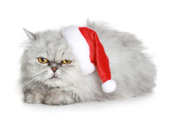 The dissatisfied grey cat in a Christmas hat. On a white background royalty free stock photos