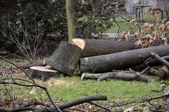 Dissected tree after hurricane Herwart in Berlin, Germany Stock Photography