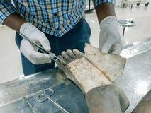 Dissection d'anatomie d'un cadavre montrant le dorsum du pied utilisant l'aileron de peau de coupe de ciseaux et de forceps de sc images libres de droits