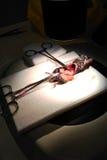 Dissection de souris Image stock