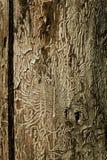 Dissipando sull'albero Fotografie Stock Libere da Diritti