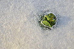 Dissolução da mola e do gelo Foto de Stock Royalty Free