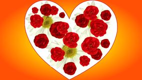 Dissolve the red roses in heart card for valentine's day, animated stock video