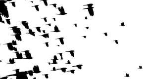 Dissolvenza per annerire i corvi illustrazione vettoriale