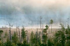 Distância obscura no pântano da floresta Foto de Stock Royalty Free